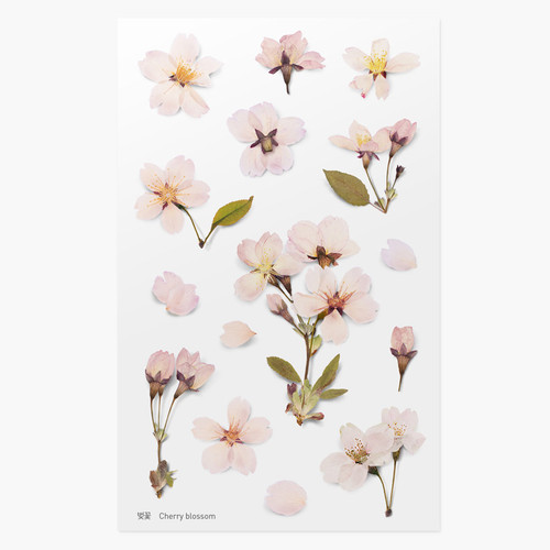 Appree Cherry blossom pressed flower deco sticker