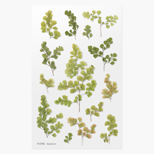 Appree Adiantum pressed flower deco sticker