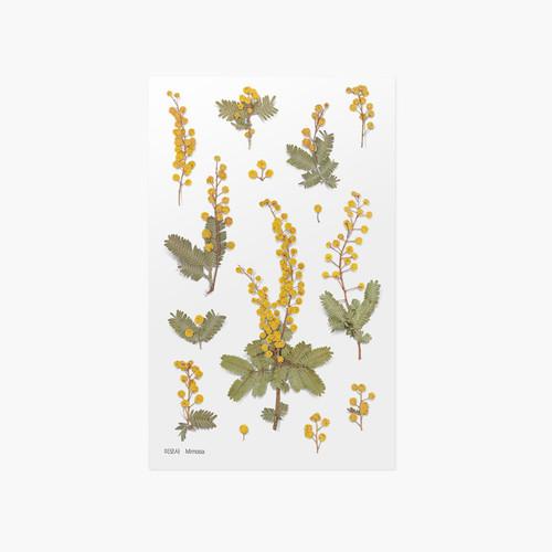 Appree Mimosa pressed flower sticker