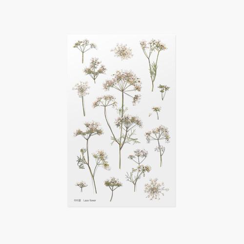 Appree Lace flower pressed flower sticker