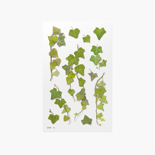 Appree Ivy pressed flower sticker