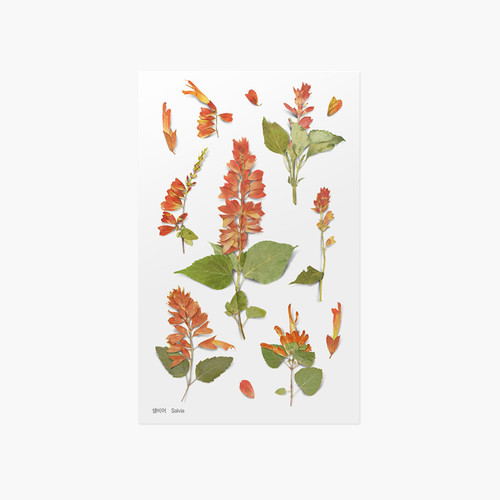 Appree Salvia pressed flower sticker