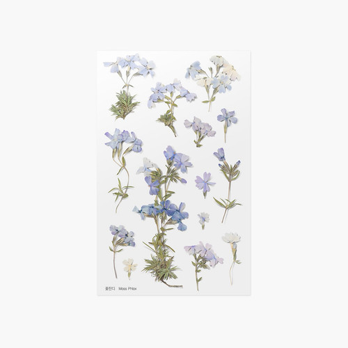 Appree Moss phlox pressed flower sticker