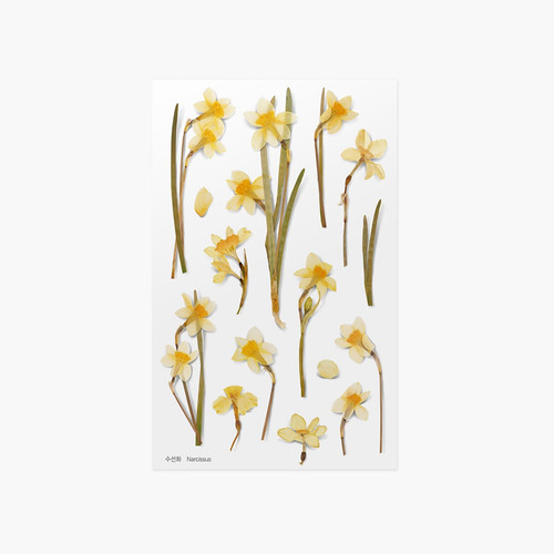 Appree Narcissus pressed flower sticker
