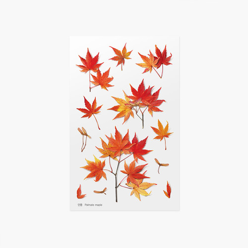 Appree Palmate maple pressed flower sticker