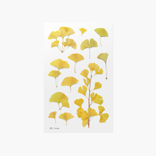 Appree Ginkgo pressed flower sticker