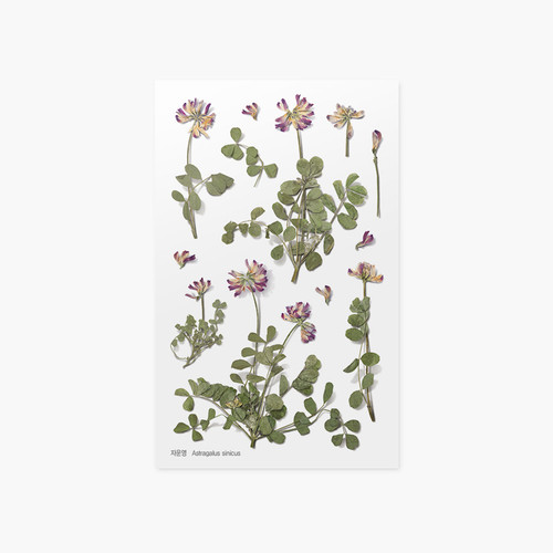 Appree Astragalus sinicus pressed flower sticker