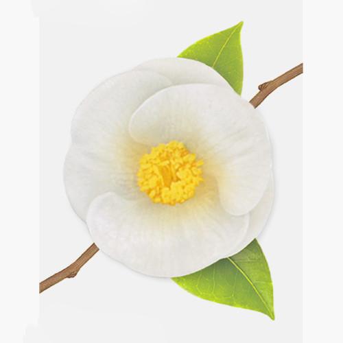 Camellia leaf white sticky memo notes Small