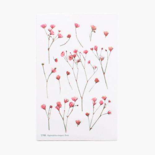 Gypsophila press flower deco sticker