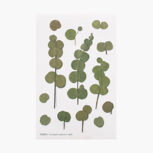 Eucalyptus press flower deco sticker