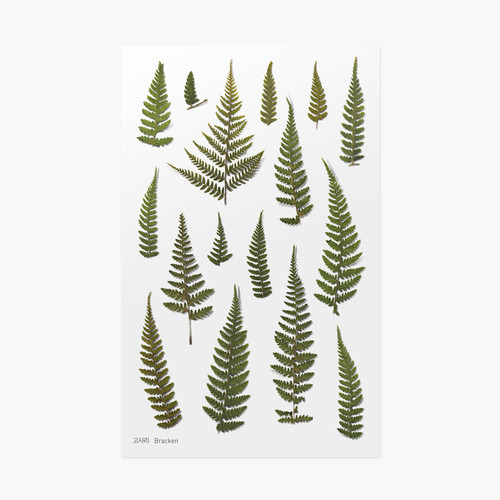 Bracken press flower deco sticker
