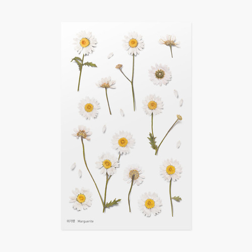 Marguerite press flower deco sticker