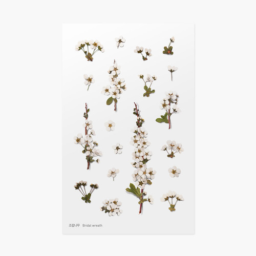 Bridal wreath press flower deco sticker