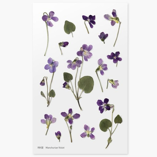 Appree Manchurian violet press flower stickers