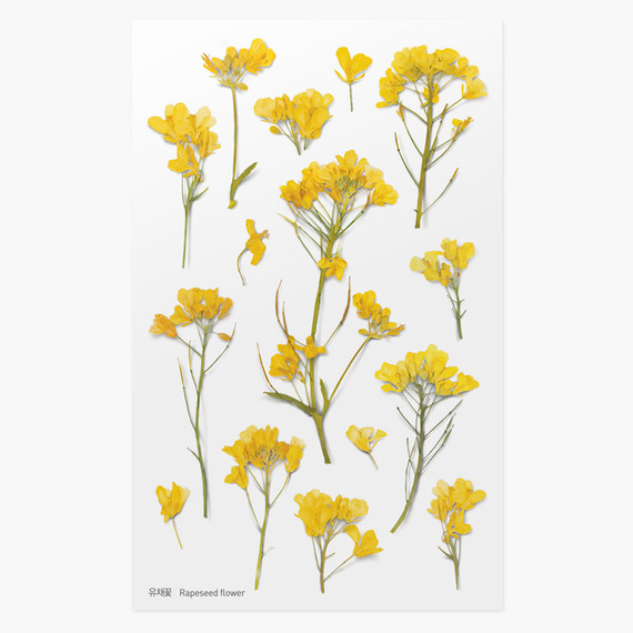Appree Rapeseed flower pressed deco sticker