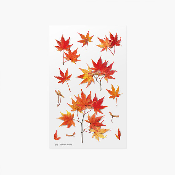Appree Palmate maple pressed flower sticker