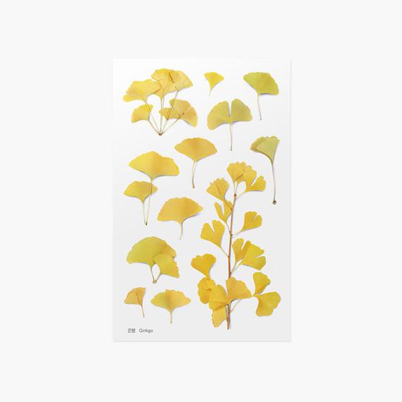 Appree Ginkgo pressed flower sticker