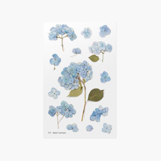 Appree Bigleaf hydrangea pressed flower sticker