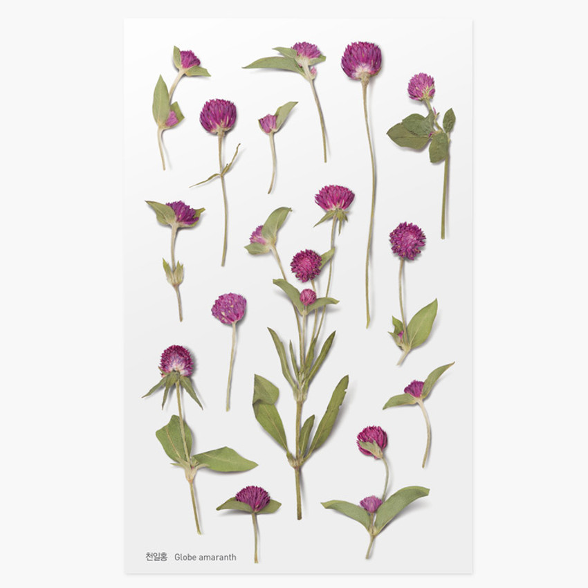 Appree Globe amaranth pressed flower deco sticker