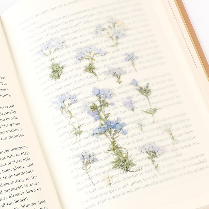 Appree Moss phlox pressed flower sticker