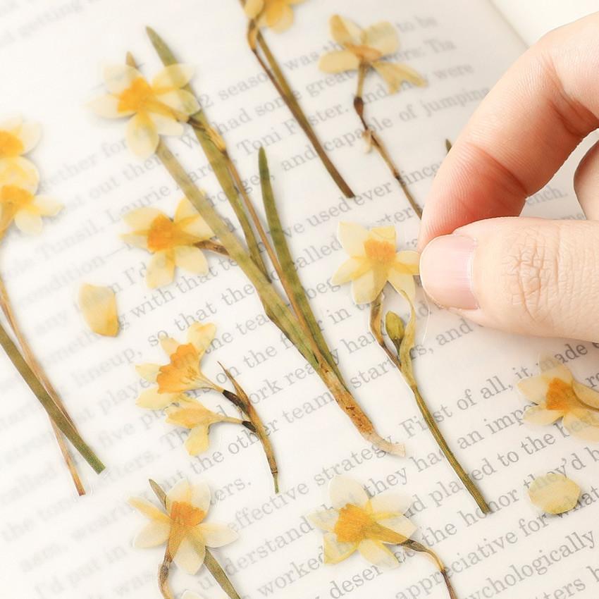 Appree Narcissus pressed flower sticker