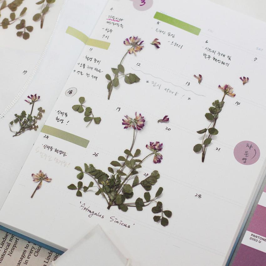 Usage example - Appree Astragalus sinicus pressed flower sticker