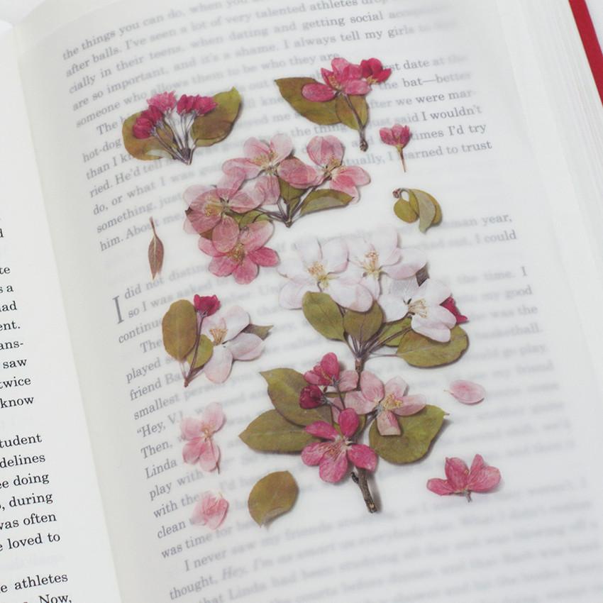 Appree Apple blossom pressed flower sticker
