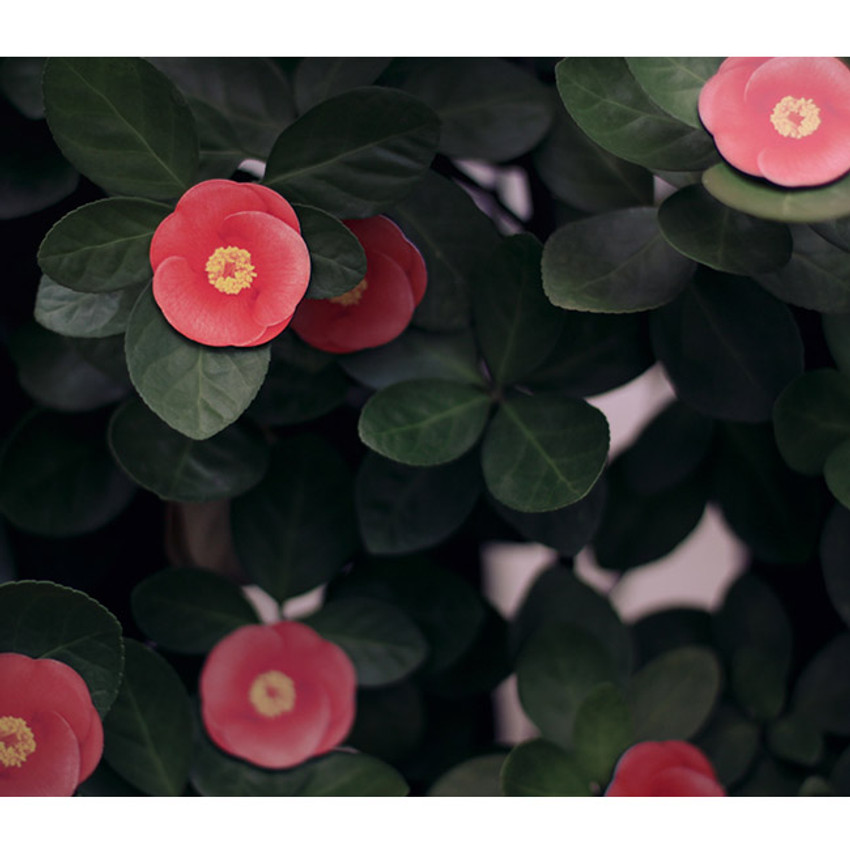 Camellia leaves magnet set