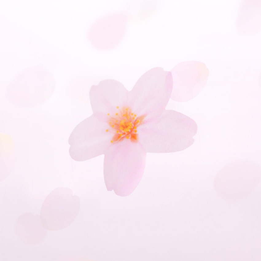 Cherry blossom transparent sticky memo notes Medium