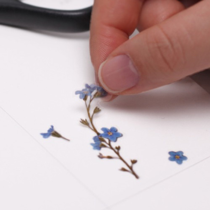 Appree Forget me not press flower deco sticker