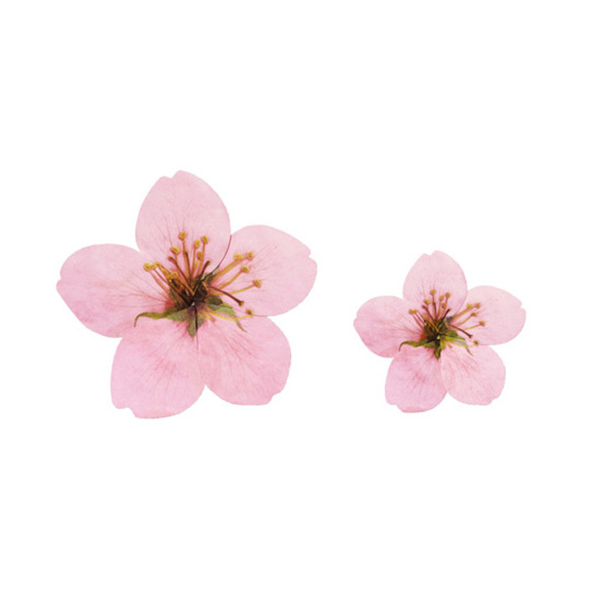 Set of ABJECTION Apple blossom cards and envelope set