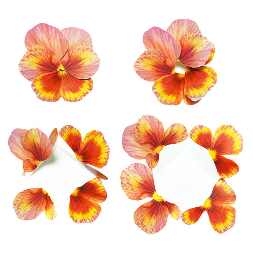Orange - ABJECTION Pansy flower card and envelope set ver2