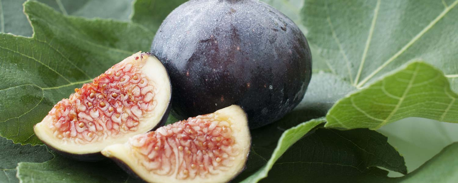 Rosemira Ingredients - Fig Botanical Extract