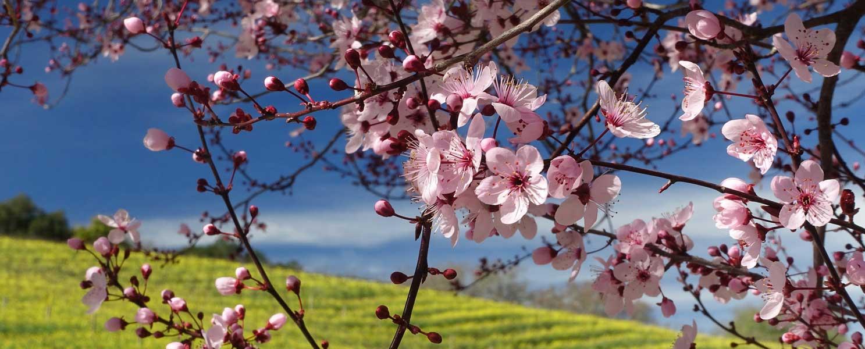 About Rosemira Organics
