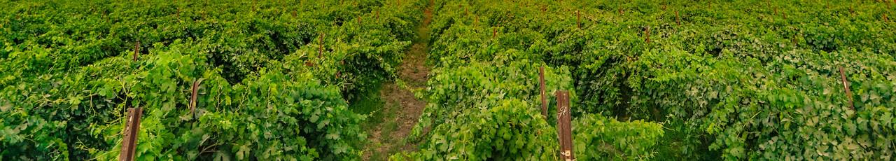 Calivines Wine