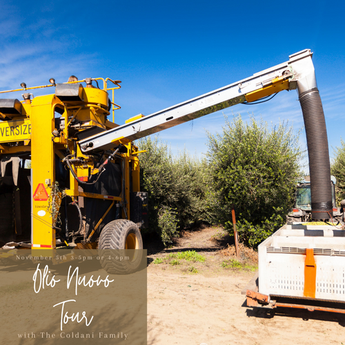 Olive Harvest Mill Tour