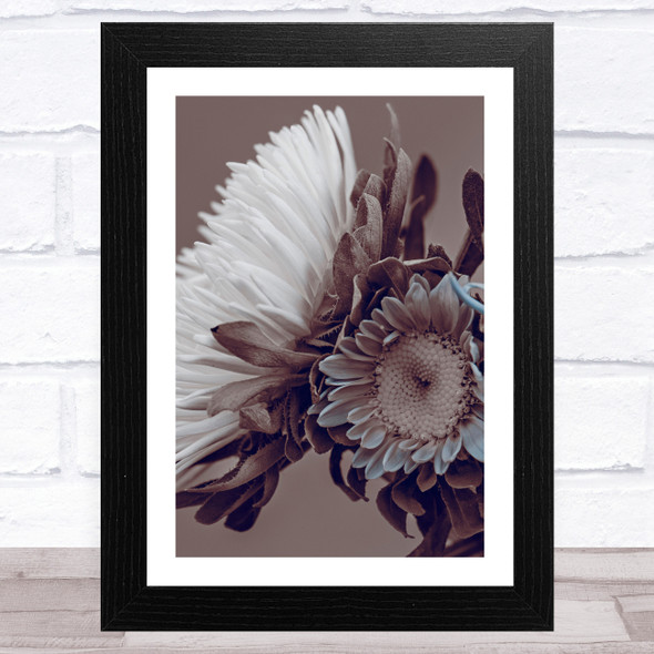 Aster Flowers Sepia Style 1 Wall Art Print