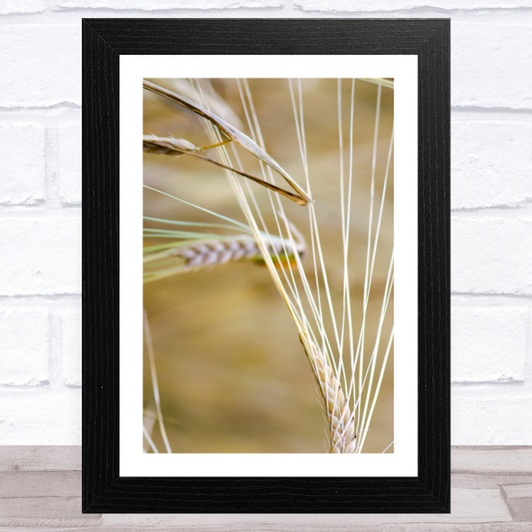 Close Up Ear Wheat Design 3 Wall Art Print