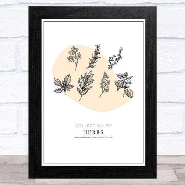 Collection Of Herbs Vintage Wall Art Print