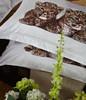 DM486Q Dolce Mela Luxury Bedding