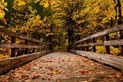 Enjoy Your Beautiful Fall Walks with Brazos Walking Sticks