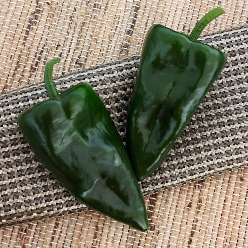 Trident Poblano Pepper