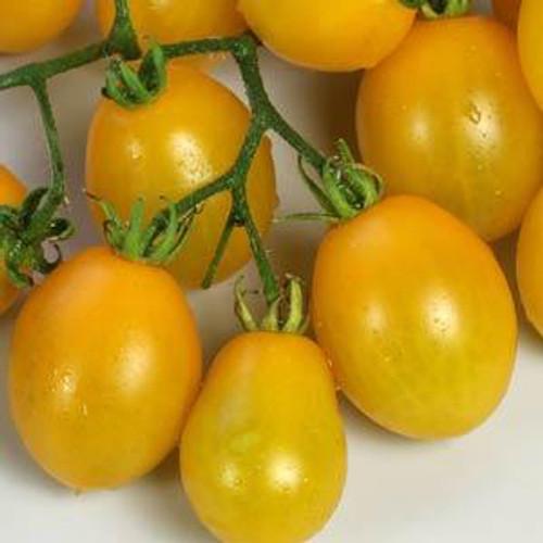 Peardrops Tomato