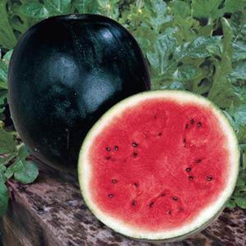 Sugar Baby Watermelon