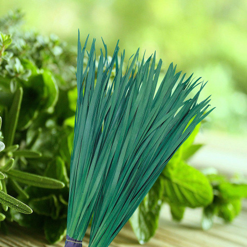 Chinese Broadleaf Chives