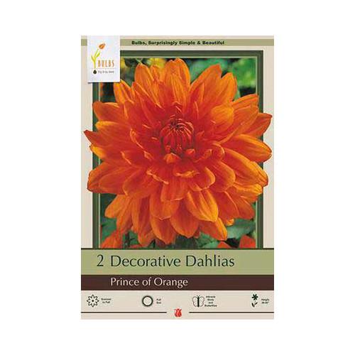 Dahlia 'Prince of Orange'