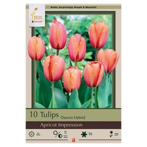Tulip  'Apricot Impression'
