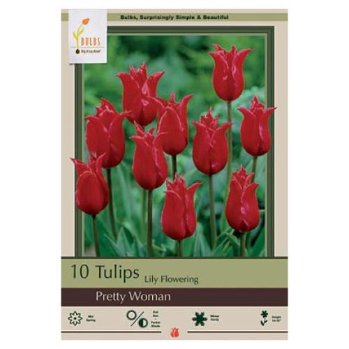 Tulip 'Pretty Woman'