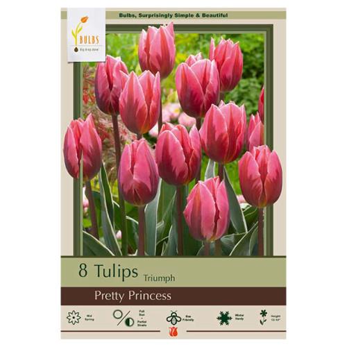Tulip 'Pretty Princess'