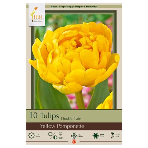 Tulip 'Yellow Pomponette'